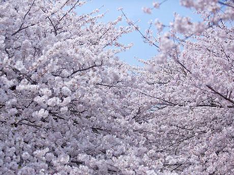 このサイトは村山嘉昭がこれまで撮影した写真と、現在進行形の写真日記、掲載誌等のお知らせ案内等で構成されています。